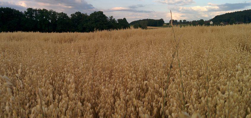Getreide-Ernte 2015