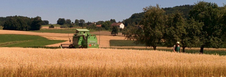 Hafer und anderes Getreide