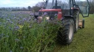 Mulchen von Damit dieses Feld im Frühjahr 2016 mit Chabis bepflanzt werden kann, musste es im Herbst gemulcht und später gepflügt werden.