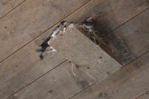 Die Schwalben bauen sich ihr Nest auch ohne solche Hilfen, die Brettchen sind jedoch eine einfache Möglichkeit, den Nestort vorzugeben.