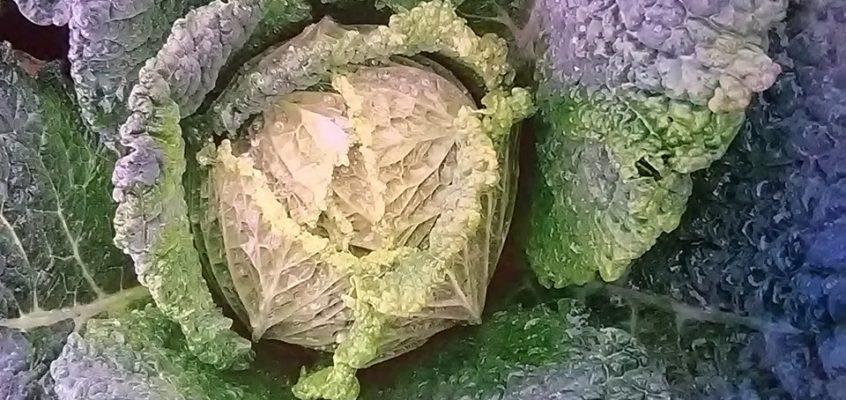 Gemüse und allerlei Gesundes:  Verkauf ab Hof 2018 & 2019